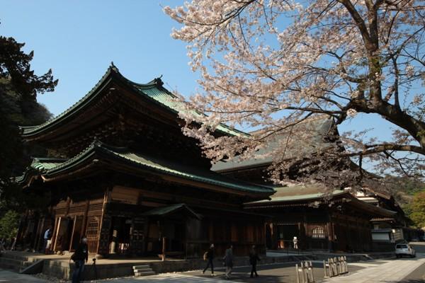 建長寺の桜_c0310571_21513377.jpg