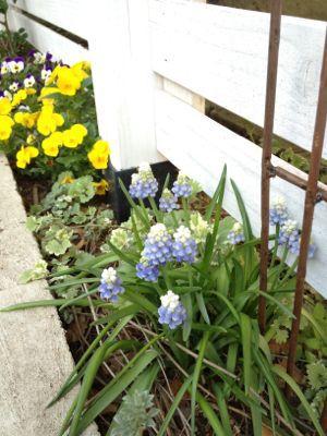 春がきた_f0173771_22391020.jpg