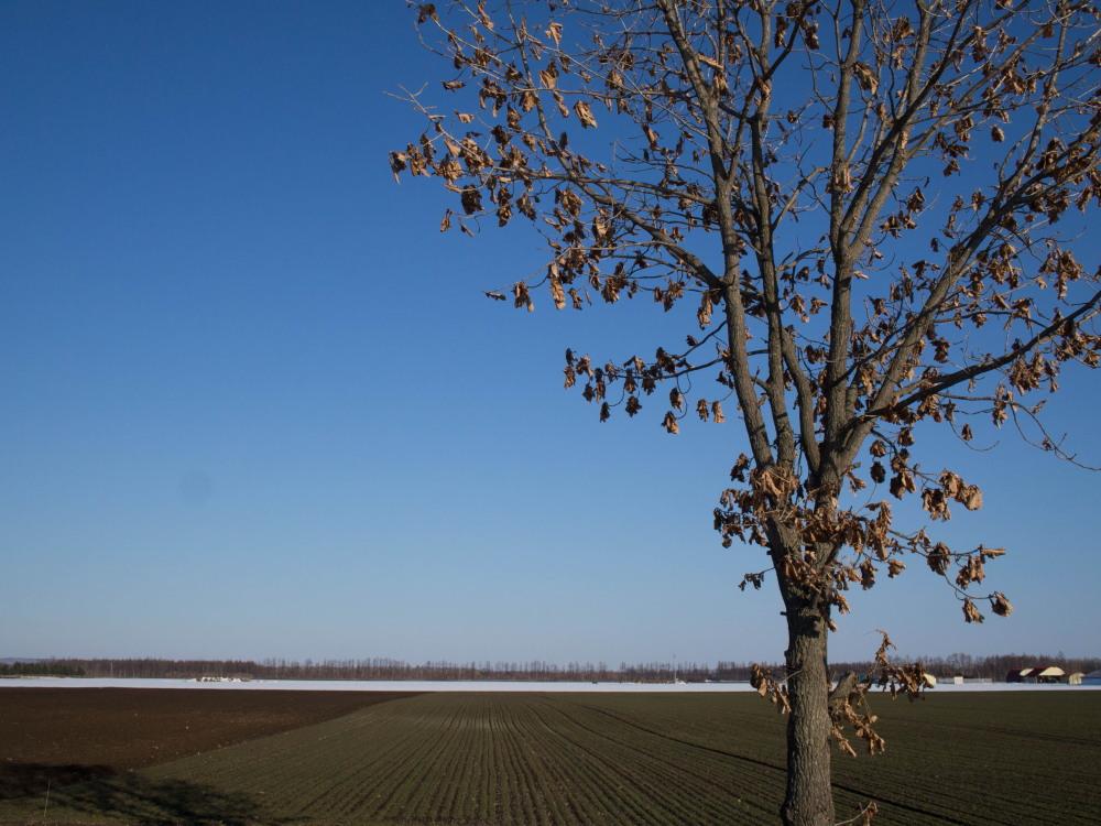 雪どけ進む・・中札内村の農村風景_f0276498_18212836.jpg
