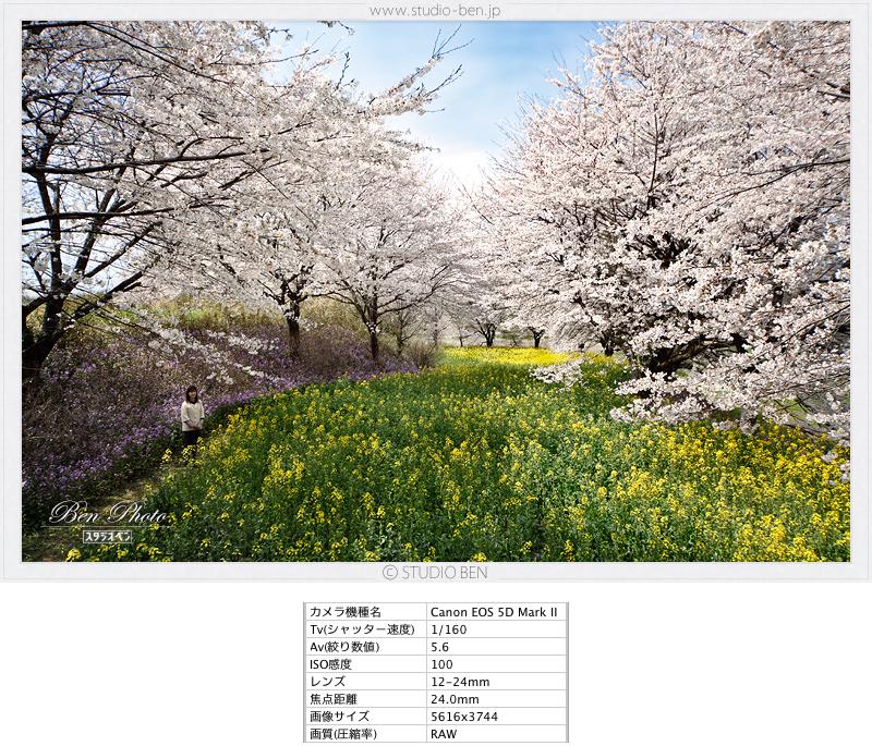 今年の桜はどうかな?_c0210599_2323735.jpg