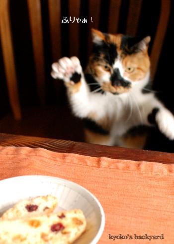 ビスコッティと猫。いつもの光景。_b0253205_2311187.jpg