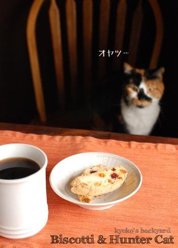 ビスコッティと猫。いつもの光景。_b0253205_2383142.jpg