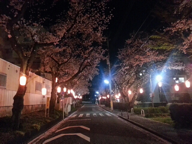 東京の桜2014_b0042308_7165737.jpg