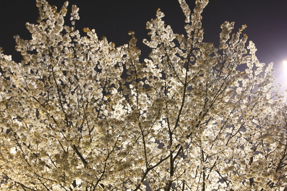 【散撮】夜の公園_f0141609_2232275.jpg
