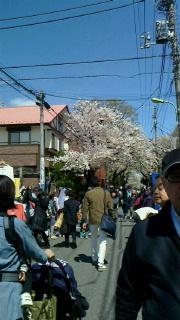 満開の桜の下で・・・_d0191211_13521812.jpg