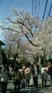 満開の桜の下で・・・_d0191211_1352673.jpg