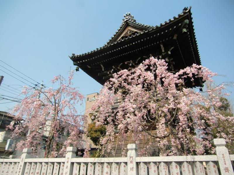 4月8日(火) 花まつり_d0278912_1153939.jpg