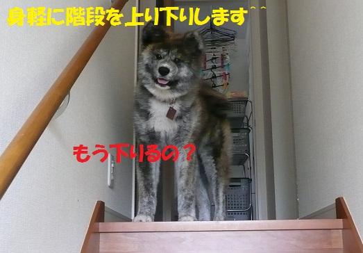 f0121712_13484674.jpg