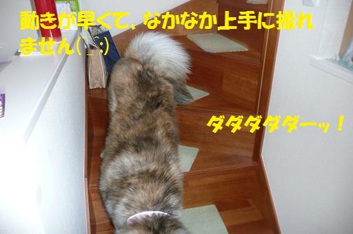 f0121712_13485476.jpg