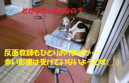 f0121712_1435593.jpg