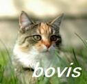 ネコから飼い主へ感染した結核_e0156318_12273469.jpg