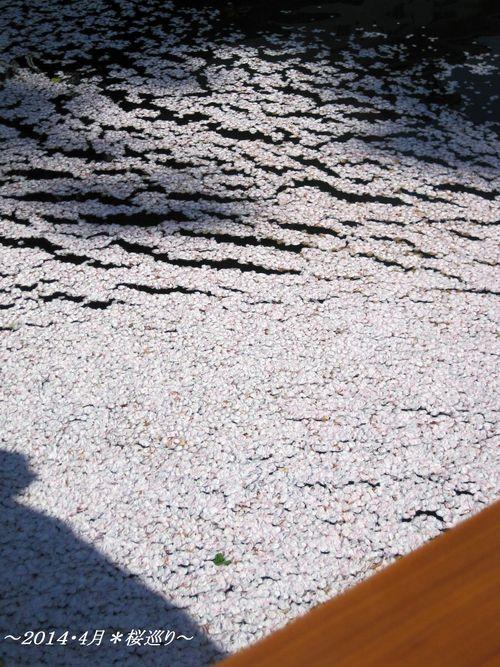 b0203919_200827.jpg