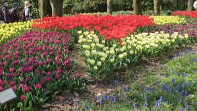 春ネイル_c0223630_21435068.jpg