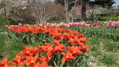 春ネイル_c0223630_21435163.jpg