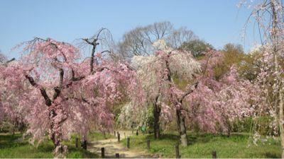 春ネイル_c0223630_21435661.jpg