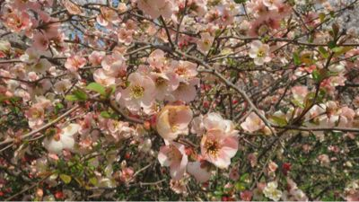 春ネイル_c0223630_21445284.jpg