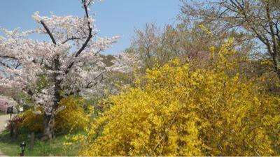春ネイル_c0223630_21451020.jpg