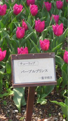 春ネイル_c0223630_21451854.jpg