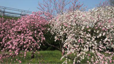 春ネイル_c0223630_2145199.jpg