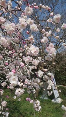 春ネイル_c0223630_2145262.jpg
