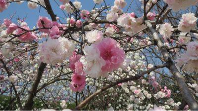 春ネイル_c0223630_2145726.jpg