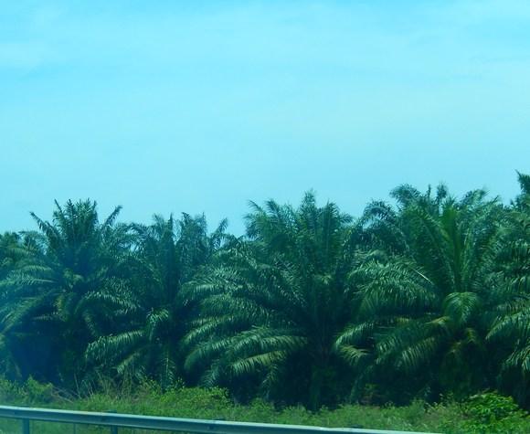 帰って来ました。...マレーシア旅行_b0137932_13311038.jpg