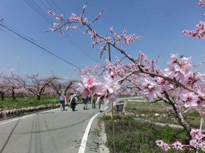 山梨市の桃は満開♪_f0019247_21544158.jpg
