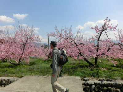 山梨市の桃は満開♪_f0019247_21551535.jpg