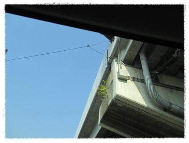車の窓から・・・_b0151748_12265158.jpg