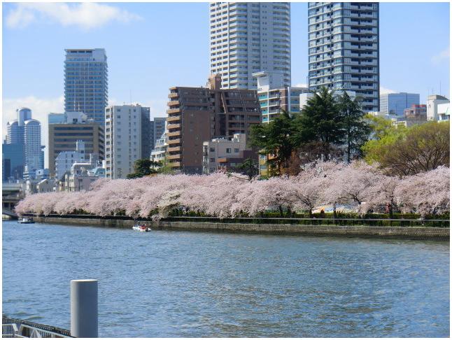 大阪天満・大川端の桜散り染め_b0104092_10173523.jpg