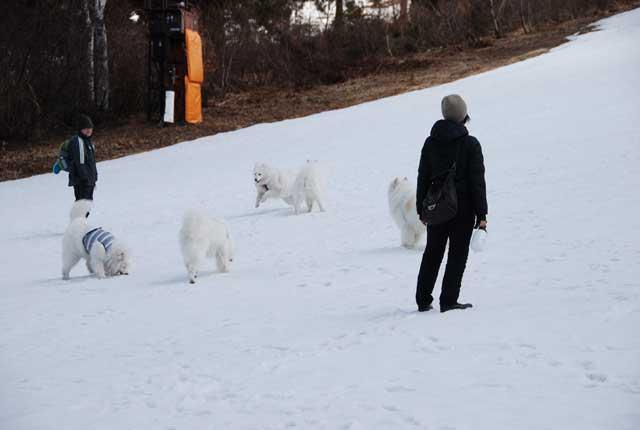 みなみちゃん地方へ春の雪遊びに_b0120492_141349.jpg