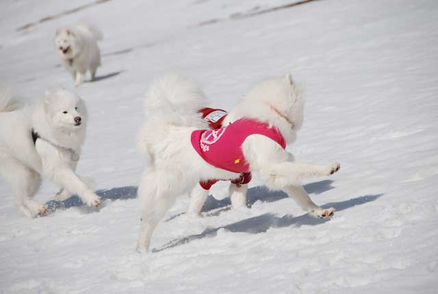 みなみちゃん地方へ春の雪遊びに_b0120492_14271638.jpg