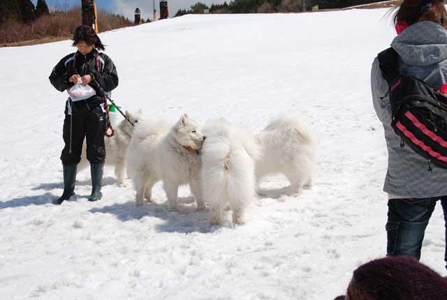 みなみちゃん地方へ春の雪遊びに_b0120492_14295510.jpg