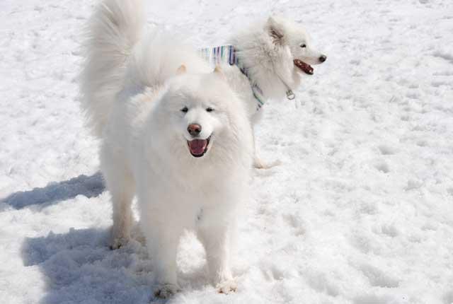 みなみちゃん地方へ春の雪遊びに_b0120492_14332267.jpg