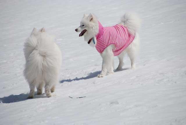 みなみちゃん地方へ春の雪遊びに_b0120492_14354297.jpg