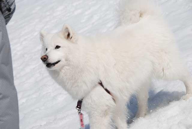 みなみちゃん地方へ春の雪遊びに_b0120492_14391810.jpg