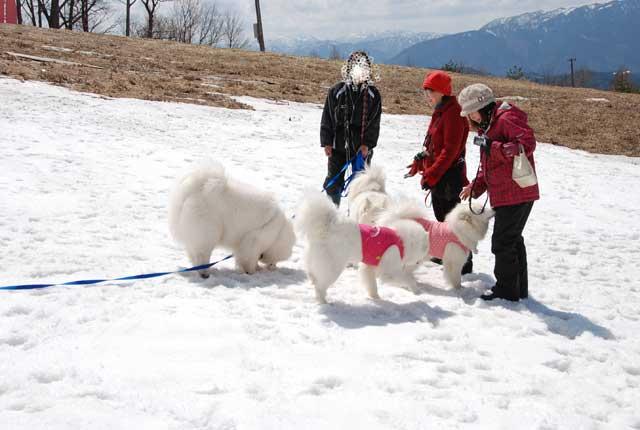 みなみちゃん地方へ春の雪遊びに_b0120492_1445294.jpg