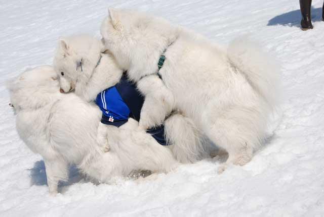 みなみちゃん地方へ春の雪遊びに_b0120492_14502895.jpg