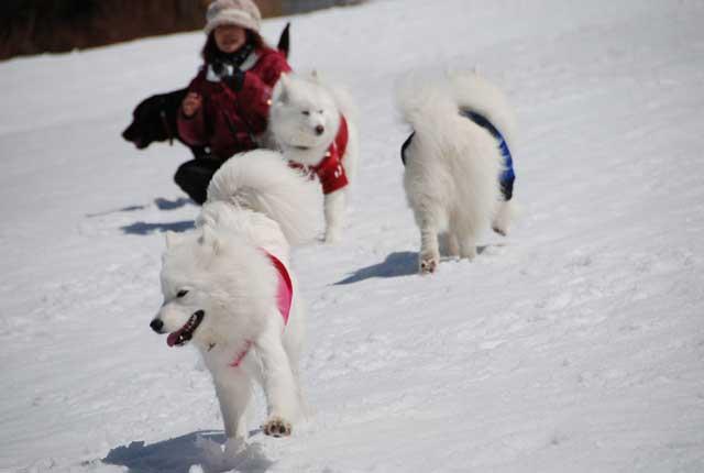 みなみちゃん地方へ春の雪遊びに_b0120492_14513316.jpg