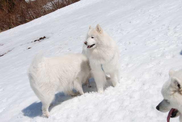 みなみちゃん地方へ春の雪遊びに_b0120492_1521206.jpg