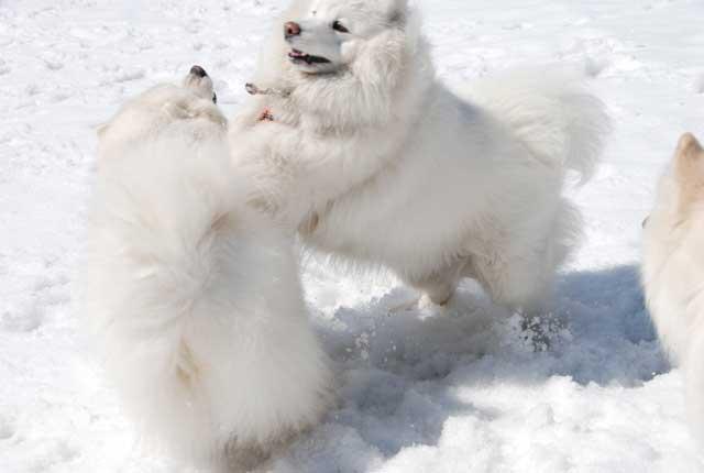 みなみちゃん地方へ春の雪遊びに_b0120492_1522571.jpg