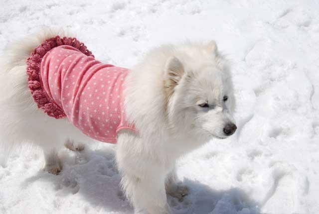みなみちゃん地方へ春の雪遊びに_b0120492_15231514.jpg