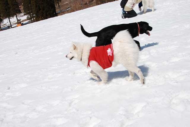 みなみちゃん地方へ春の雪遊びに_b0120492_15332116.jpg