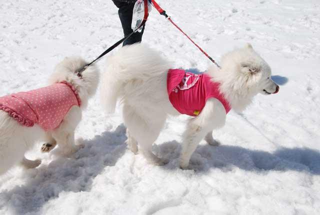 みなみちゃん地方へ春の雪遊びに_b0120492_1535326.jpg