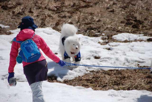 みなみちゃん地方へ春の雪遊びに_b0120492_15411532.jpg