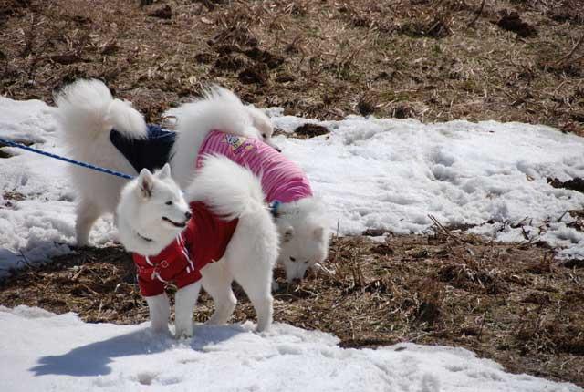 みなみちゃん地方へ春の雪遊びに_b0120492_15431897.jpg