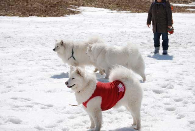 みなみちゃん地方へ春の雪遊びに_b0120492_1544168.jpg