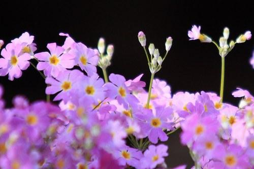 d0025894_0144526.jpg