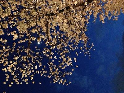 夜桜_a0273699_121749100.jpg