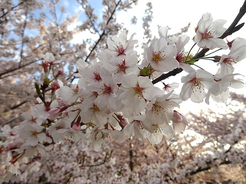 東京水路ナイトパドリング_c0137404_15263436.jpg